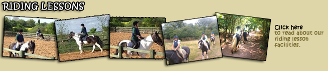 Find out about horse & donkey riding lessons